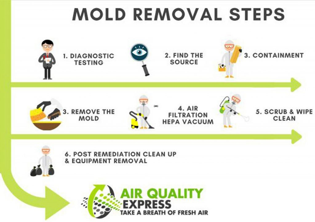 Air Quality Express Mold Removal Steps