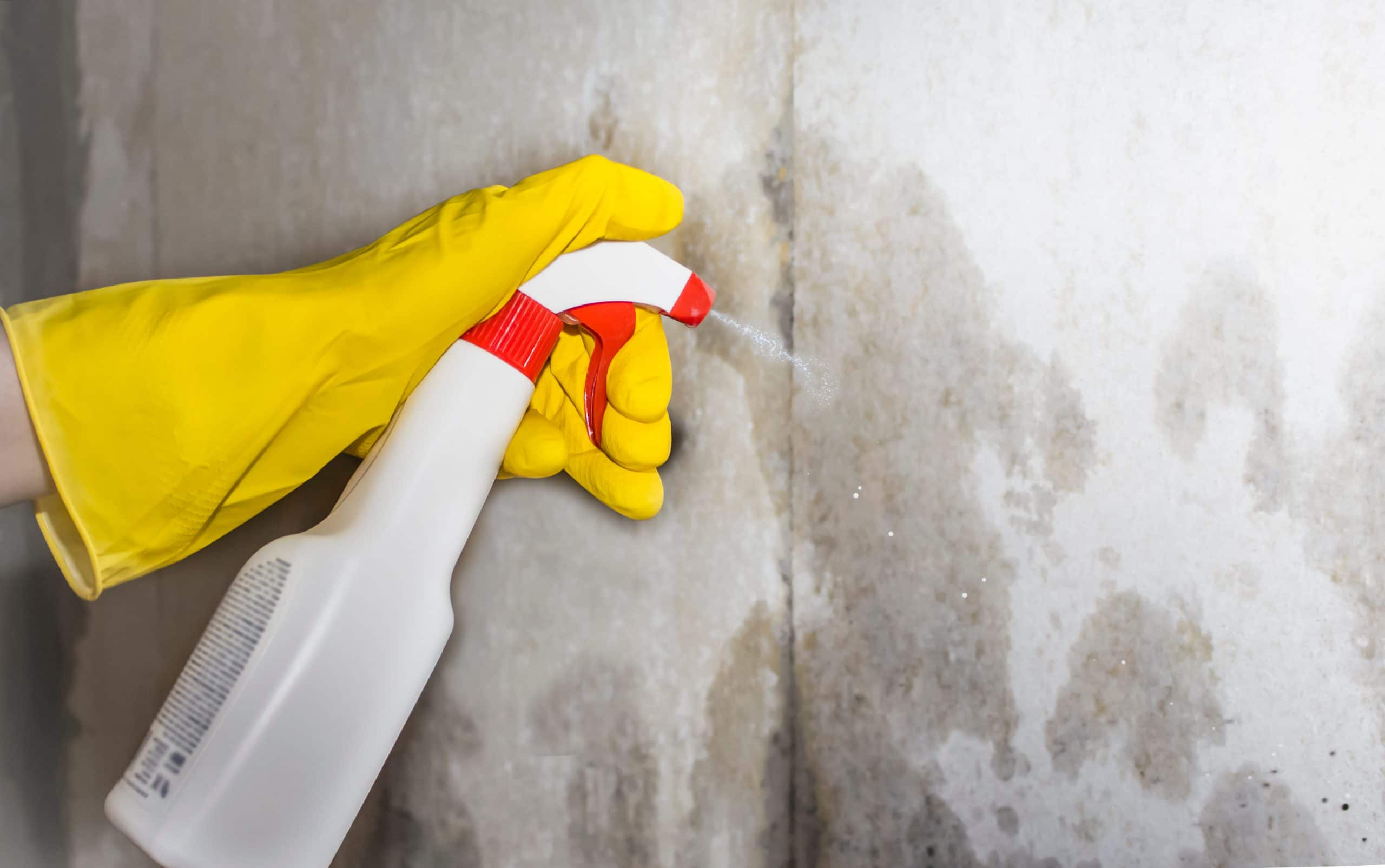 a person sprays a remedy for mold and other pests on the walls of the house - Air Quality Express