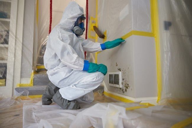 best mold remediation