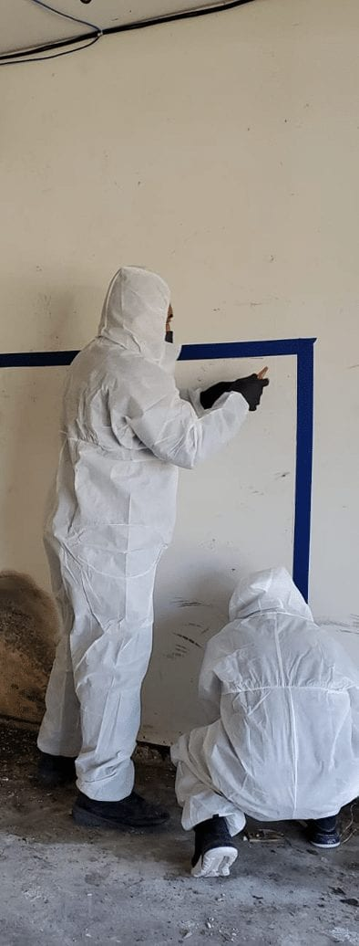 Mold remediation specialists in Houston