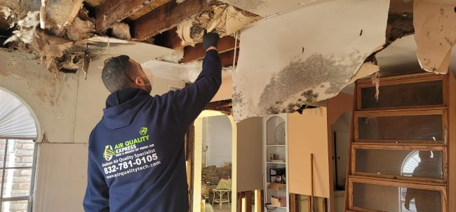 mold removal contractor Houston