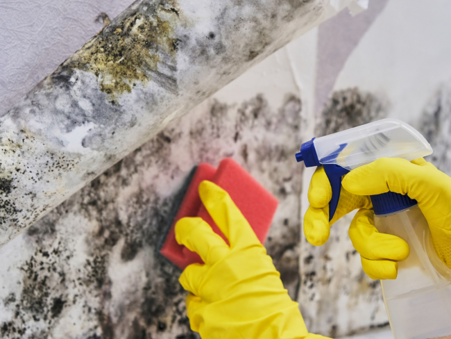 DIY mold removal