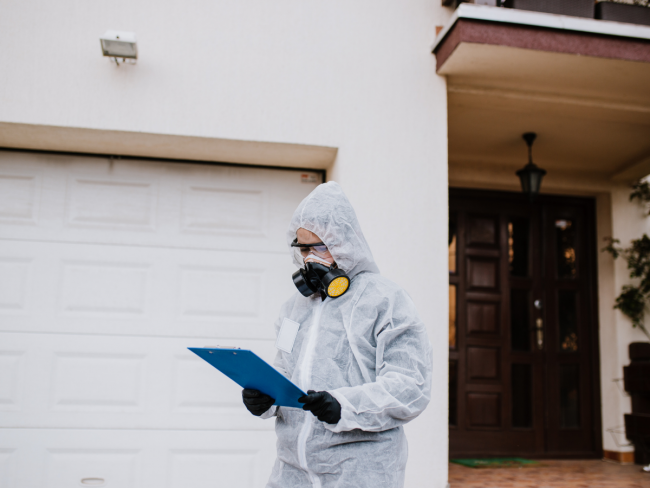 Professional mold remediation contractor